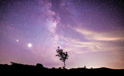 Milky Way over Dartmoor Tree