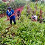 Die Arbeit auf dem PoorPoor Land