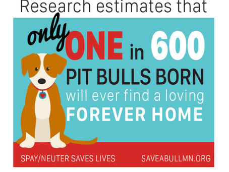🌟Saturday Rescue Blog: -  Helping The Underdog: Pit Bull Advocacy🌟