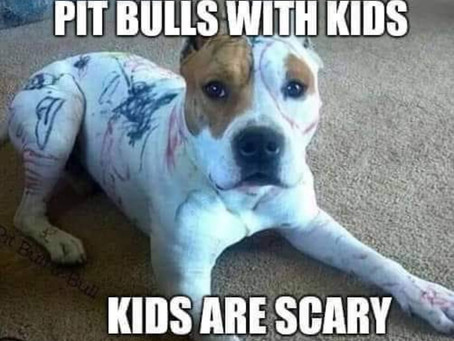 🌟Saturday Rescue Blog: -  Helping The Underdog: Pitbull Advocacy🌟