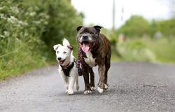 blind-dog-guide-best-friends-abandoned-rescued-stray-aid-shelter-glenn-buzz-3.jpg