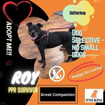 Orange Creative Dog of The Month Announc