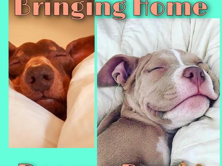 🌟Rescue Blog Tuesday - Parenting a Pet: Doggone Good Info🌟