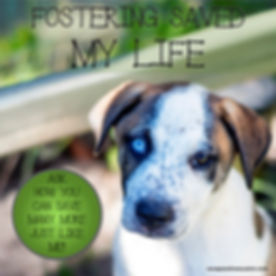 fostering-saved-my-life.jpg