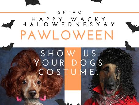 🌟Rescue Blog Wednesday - Wacky dog gone: Anything goes!🌟