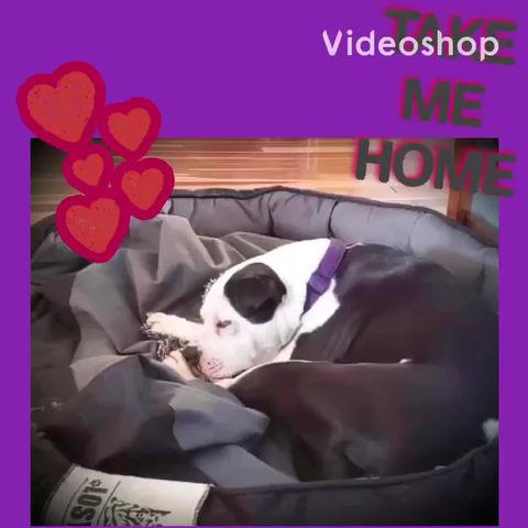 ⭐️RESCUE BLOG MONDAY-  Hotdogging Our Adoptable Beauty, Annie⭐️