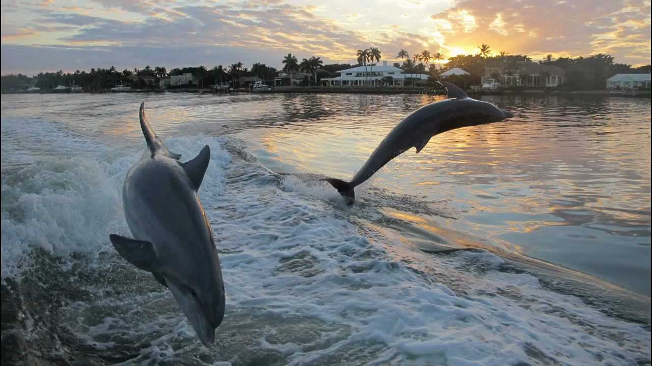 dolphins naples fl 34104, naples fl boating, naples fl 34114 boating, dolphin tours naples fl 34114,