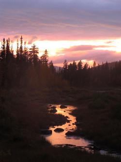 Couché de soleil sur la forêt lapone