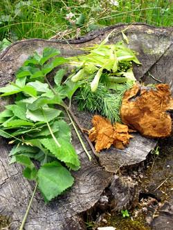Plantes sauvages comestibles et amadou