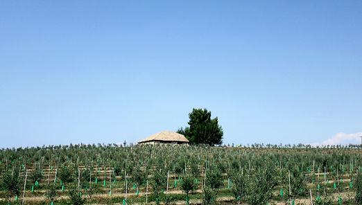 Eléia Olive Farm