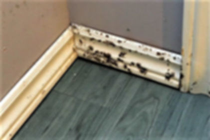 Mold on Baseboards.jpg