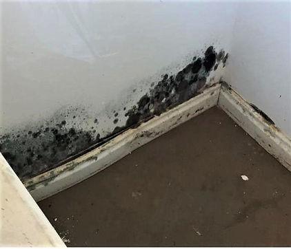 Mold On Wall3.jpg