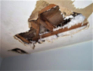 Mold In Ceiling.jpg