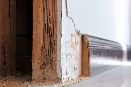 Termite Damage In Utah Home