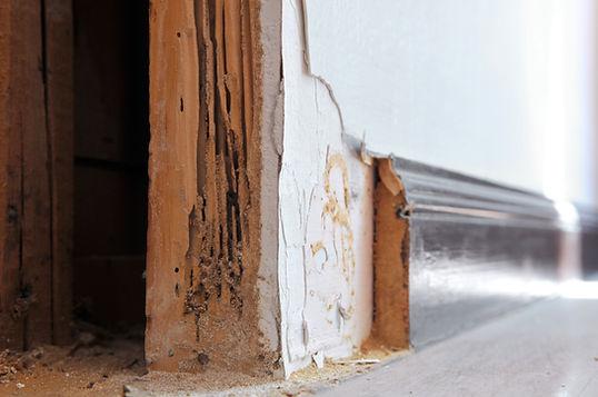 Termite damage in wall framing.jpg