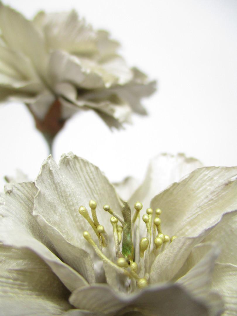 CherryBlossoms(Shiogama type)