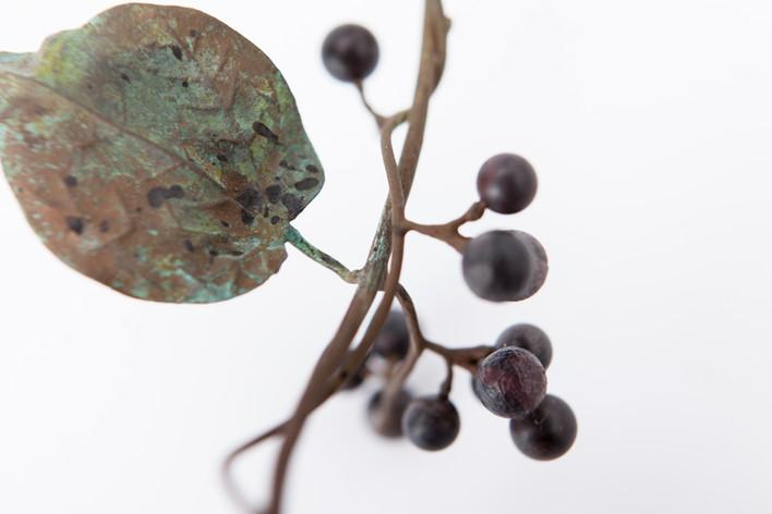 Sinomenium