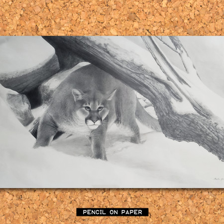 cougar_PENCIL.jpg