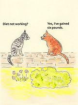weight watching cat.