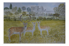 #Deer At #Powderham #Castle#kenton#devon