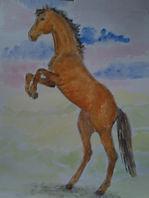 rearing horse. book illustrations  artjandavies.com