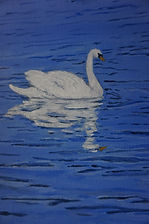 White#swan#painting And blue #Reflections#art#painting