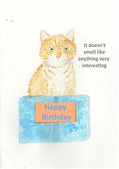 Cat saying present not smelling interesting.jpg