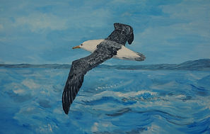 Albatros painting, flying over the oceon. www.artjanetdavies.co.uk