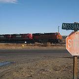 Mossmain2.jpg
