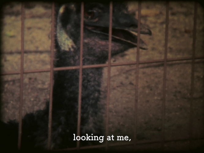 Emu-2.png