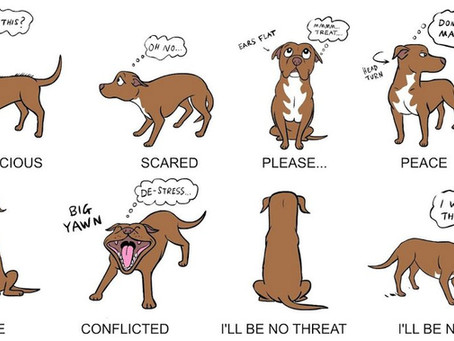 Do you want to speak the language of dogs?