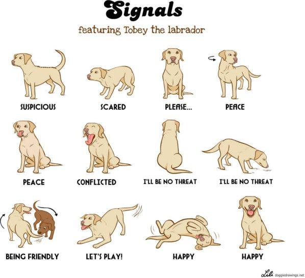 """<img src=""""hundar.png"""" alt=""""hver hreyfing hunds hefur sérstaka merkingu"""">"""