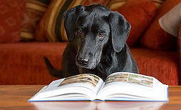 Hundeerziehung ohne Bestrafung?