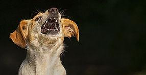 Angst bei Hunden