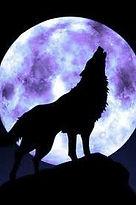 Best Wolf.jpg