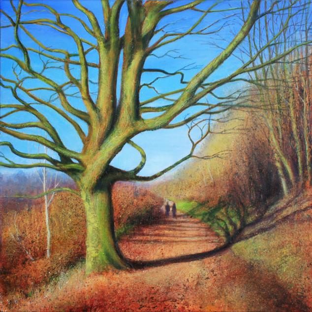 Winter Beech Tree, West Malvern