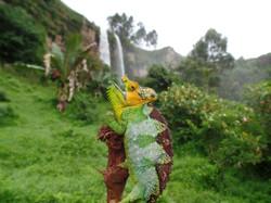 von Höhnel's Chameleon
