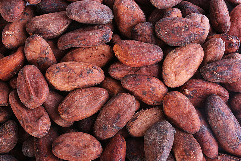 beans_stock-photo-cacao-beans-53287045.j