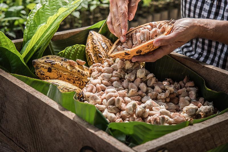 fermenting beans.jpg