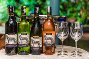 Launch of Kādu – India's first 'Wine for a Cause' by Sula
