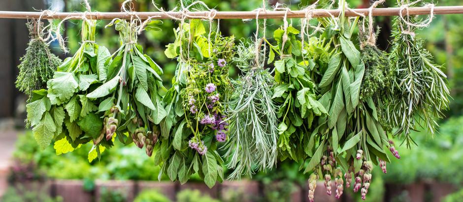 A fűszer és gyógynövény szárítás titkai