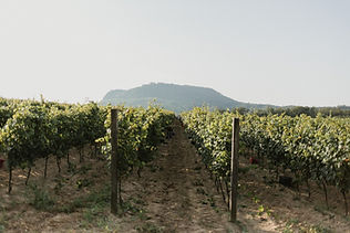 Gilvesy Szent György-hegy szüret.jpg