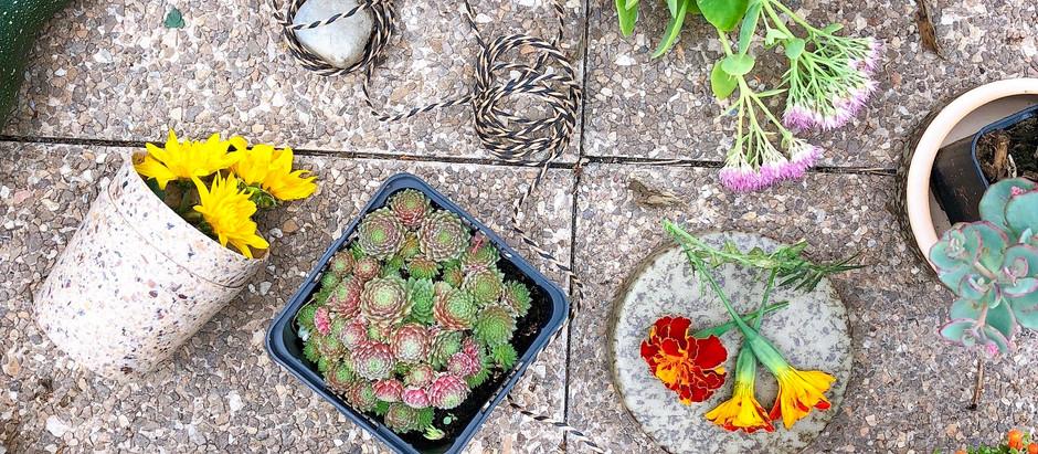 Újragondolt növénytartók a fenntarthatóság jegyében