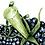 Thumbnail: Blackberries