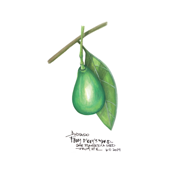 Avocado from Mom's Yard