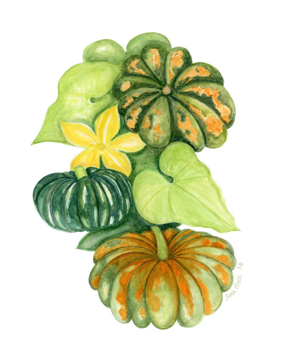 Pumpkins Illustration