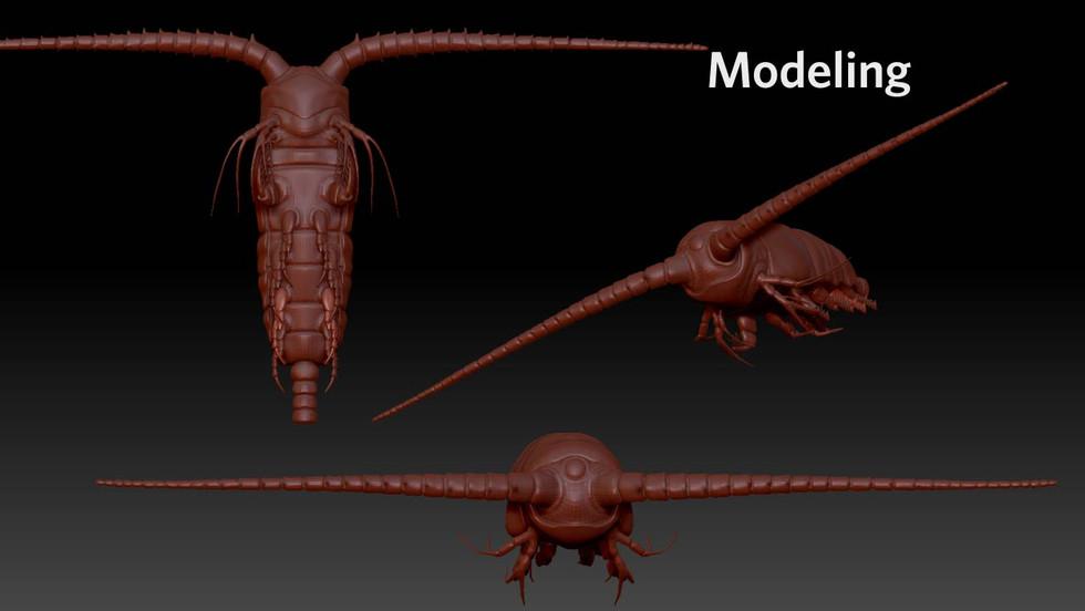 Copepod model