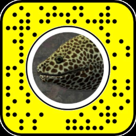 Moray Eel Lens QR Code