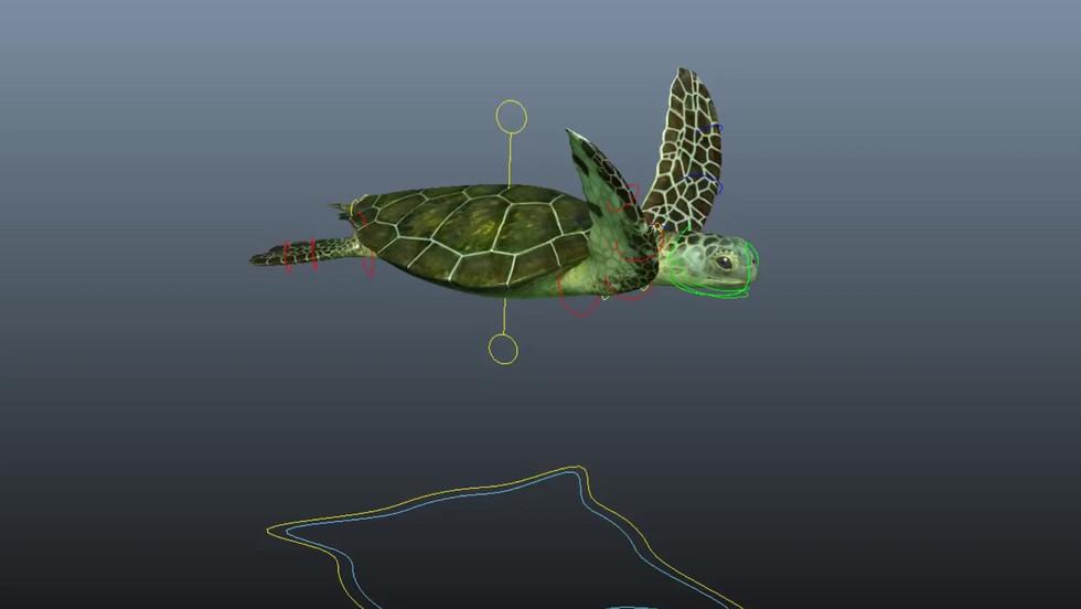 Sea Turtle Rig