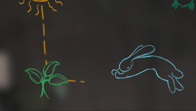 Science Today - Food Webs
